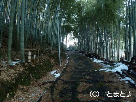 岡山烽火場(丸山烽火場)への道